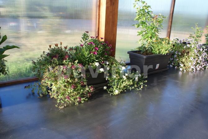 Invernadero policarbonato en invernadero