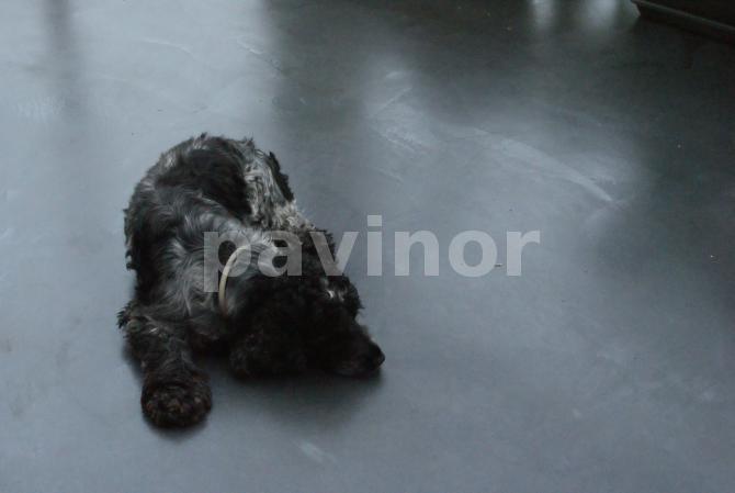 Pavimento continuo de acero inoxidable en invernadero